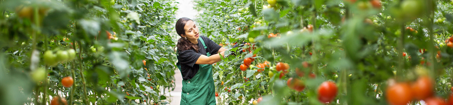 Nursery / Greenhouse Manager Career