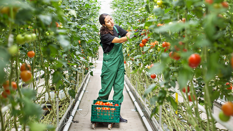 Browse Agriculture, Horticulture, & the Outdoors Careers