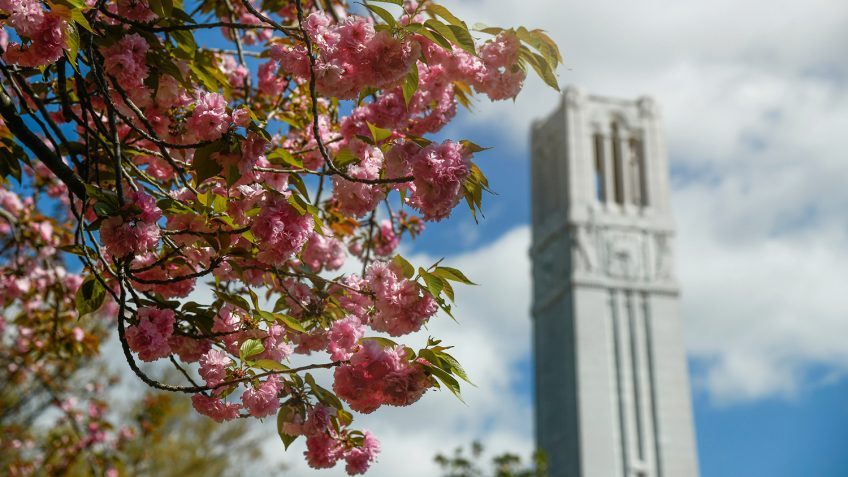 The Belltower framed by blooming trees in the spring. Photo by Marc Hall.