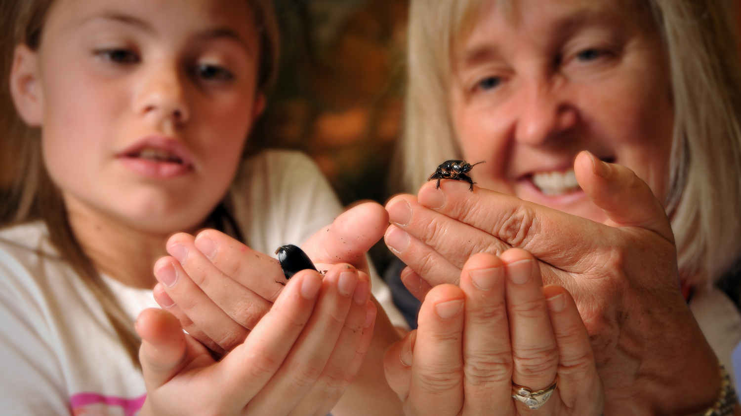 Fundamentals of Entomology - Online and Distance Education
